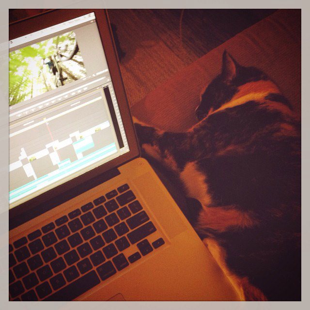 Apparently this edit needs more catnip. #editcat #toughcritic #filmmaking #heymeow